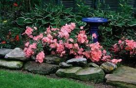 Почвопокровные розы дизайн 2