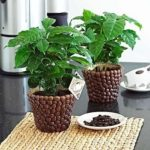 Кофе арабика нана