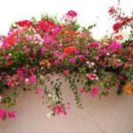 Цветы из Египта