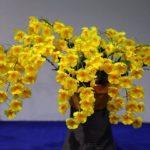 Дендробиум — орхидея гирлянда