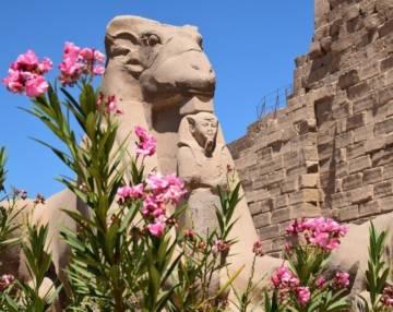 какие растения привезти из Египта