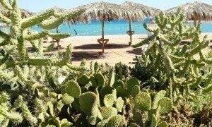 кактусы в египте