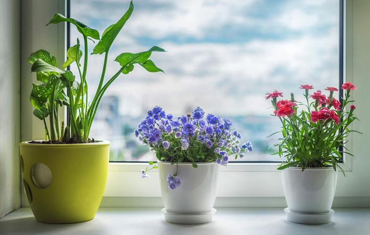 Комнатные растения фото 2