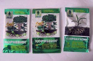 Корневин, гетероауксин