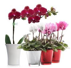 Комнатные растения фото 4