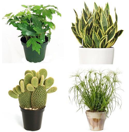 Комнатные растения фото 3