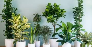 Комнатные растения фото 1
