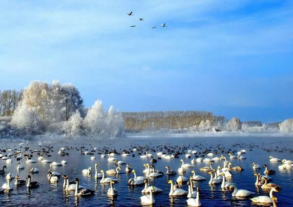 Моя поездка на Лебединое озеро и Архиерейское подворье