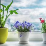 Поверья, связанные с растениями