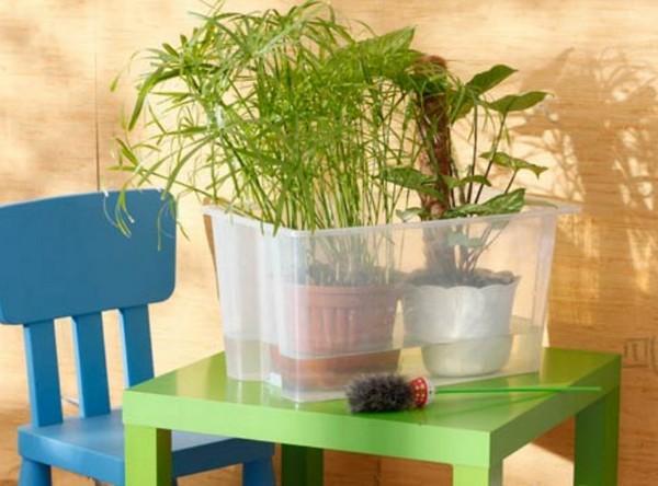 Как сохранить комнатные растения на время отъезда