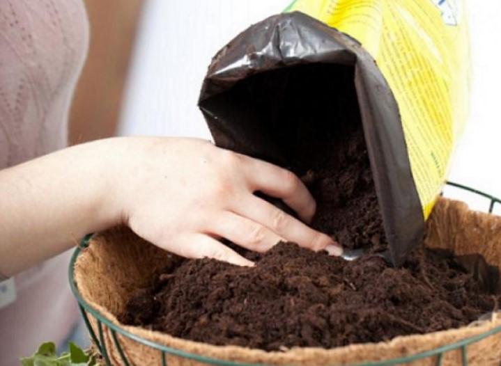 Почва для ананаса
