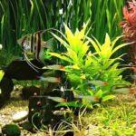 Подводный сад