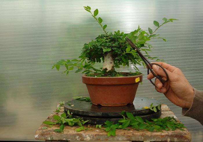 Срезать верхушку у растения