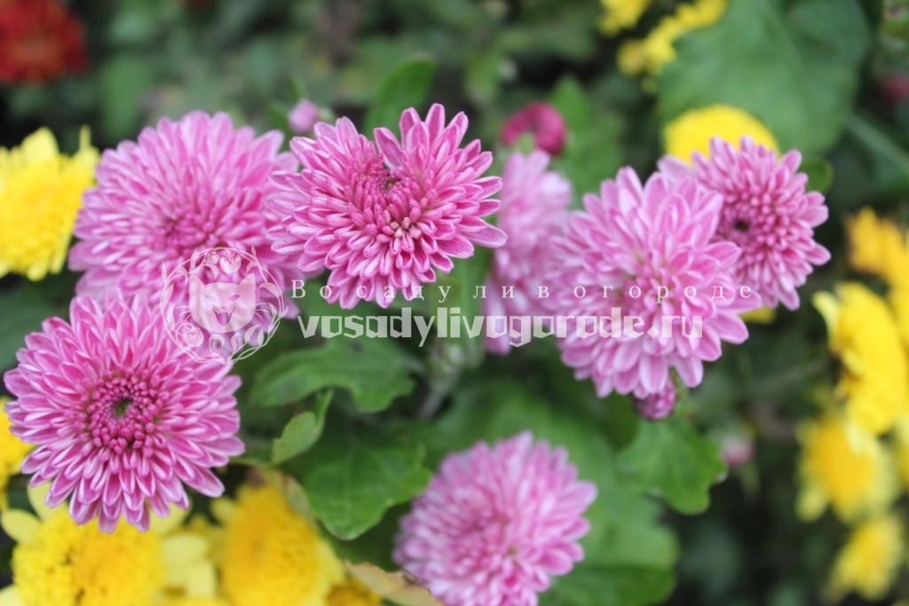 Цветы, украшающие сад осенью