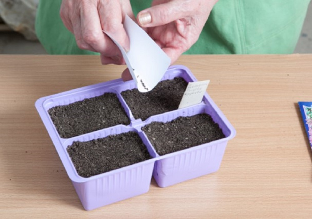 Посеять семена в контейнер