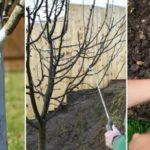 Мартовские работы в саду
