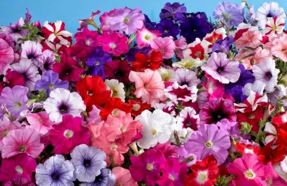 Какие цветы можно посадить на рассаду в марте - апреле
